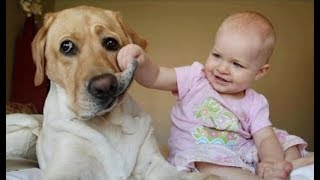 Download Best Babies Laughing Hysterically at Dogs Compilation (2014) Video