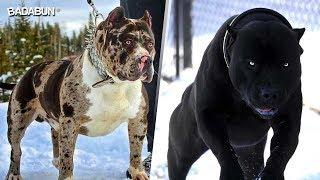 Download 5 Razas de perro que parecen creados por Satanás Video