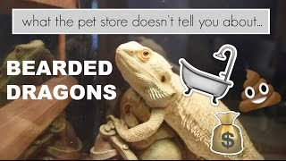 Download What the pet store doesn't tell you: Bearded Dragons Video
