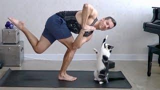 Download Cats Interrupting Yoga Video