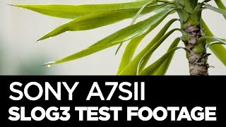 Download Sony A7sII | SLog3 Test Footage Video