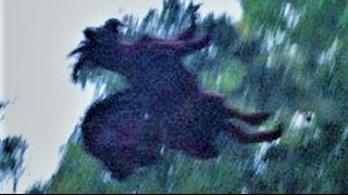 Download 13 BIZARRE Paranormal Creatures Video