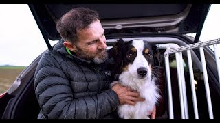 Download The dog that helped to design a car Video