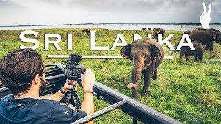 Download Awesome Elephant Encounter on Safari in Sri Lanka Video