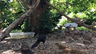 Download Friday 08-04-2017 02:40 pm - 03:00 pm Wildlife Feeder Cam Video