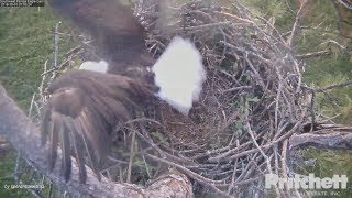 Download SWFL Eagles. ~ First Sunrise Live. Stick Delivery, by M15 Video