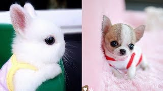 Download Cutest Animals! Cute baby animals Videos Compilation cute moment of the animals #7 Video