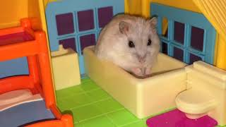 Download Happy Hamsters and their Hamillion-dollar Hamansion! :p Video