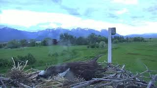 Download Osprey Nest - Charlo Montana Cam 06-17-2018 19:37:05 - 20:37:06 Video