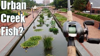 Download Fishing an URBAN Creek and Catching MYSTERIOUS Fish??? Video