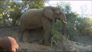 Download Safari Live : Ellie get's mad at James for laughing at him June 25, 2016 Video