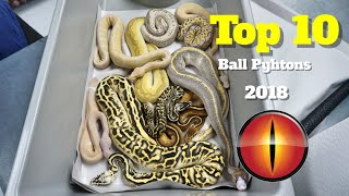 Download My Top 10 Ball Pythons From 2018 !!! Video