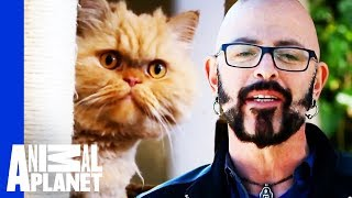 Download Mr Weasley's Owner Needs Help To Stop Him Destroying Her Home | My Cat From Hell Video