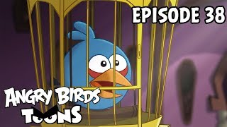 Download Angry Birds Toons | A Pig's Best Friend - S1 Ep38 Video