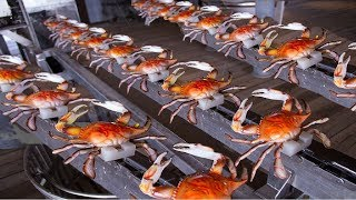 Download How to Harvesting Crab - Amazing Crab Factory - Crab Meat Processing Line Video