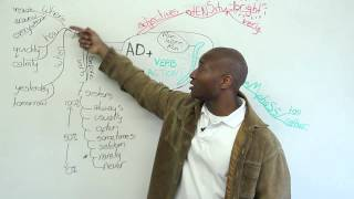 Download 3 ways to use adverbs Video