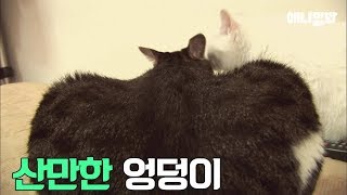 Download 지방간 걸린 9kg 뚠뚠한 고양이 (feat 캣초딩 트레이너) Video