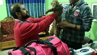 Download Scottish Fold Cat @ Dr. Sagir's Pet Clinic 01912251312 Vet in Dhaka City Video