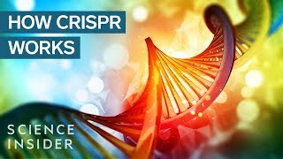 Download Carl Zimmer explains the CRISPR DNA editing system in 90 seconds Video