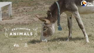 Download Snuggle With Rescue Donkeys While They Look For Their Forever Homes | The Dodo Airbnb Experiences Video