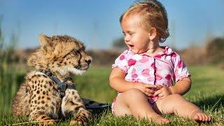 Download Cheetahs Best Friends With Children Video