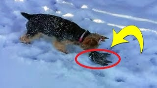 Download This Dog Found A Tiny Animal Frozen In The Snow Then Her Owner Told Her To Get Away From It Video