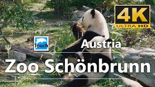 Download Zoo Schönbrunn, Vienna, Austria - 4K Video