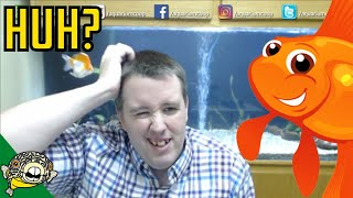 Download Goldfish Aquarium into Breeding fish for profit? Live Stream Video