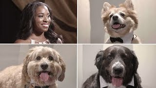 Download Dogs Try to Score Their Owners a Date! Video