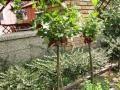 Download zahrada 2013 Video