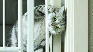 Download 고양이가 7cm 틈을 빠져나갈수 있을까? 고양이 프리즌브레이크 Video