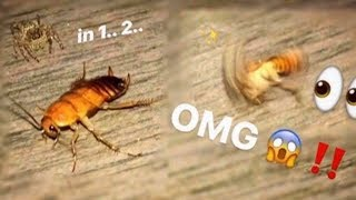 Download Tiny SPIDER wanted to EAT my SCORPION so I gave it a HUGE cockroach !!! Video