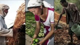 Download FAO Policy Series: Sustainable Food and Agriculture FAO、持続可能な食料と農業(日本語) Video