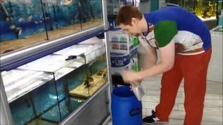 Download Recepción y Aclimatación de Peces-Pety Acuariofilia - acuapety Video