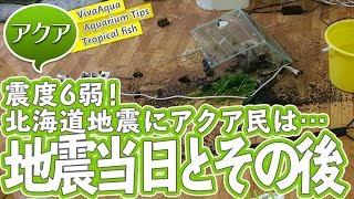 Download [水槽倒壊]震度6弱、北海道地震当日の状況と現在の様子[アクアリウム] Video