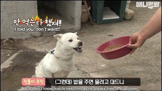 Download A dog which gets mad when someone gives him food (There's a plot twist) Video