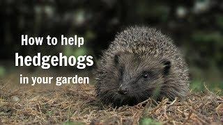 Download The Wildlife Garden Project - How to help hedgehogs in your garden Video
