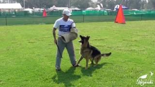 Download Baron vom Bierstadter Hof - Protection Work at NBS 2017 Video