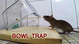 Download bowl mouse trap Video
