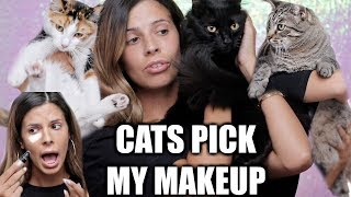 Download MY CATS PICK MY MAKEUP Video