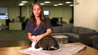 Download Easy Way to Pill Your Cat | Pets Plus Us Tips and Tricks Video