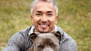 Download The Untold Truth Of The Dog Whisperer Video