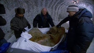 Download The Perfectly Preserved Frozen Yuka Mammoth Mummy - Woolly Mammoth: Secrets from the Ice - BBC Two Video