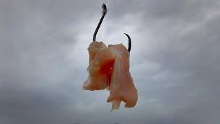 Download Will Chicken Catch More Catfish Than Bluegill ? Video