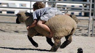 Download Enfants drôles et les tout-petits jouant avec les animaux de la ferme Video