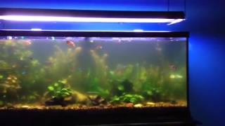 Download How to clear cloudy aquarium water Video
