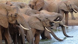 Download Safari in Tsavo west Kenya 2018 Video