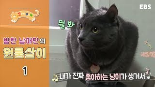 Download 고양이를 부탁해 - 밤탄 남매단의 원룸살이 #001 Video