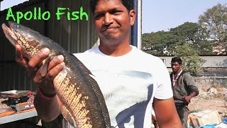 Download How To Cook Boneless Fish - Battered Fish Recipe - Simple Fish Recipes For Two - Apollo Fish indian Video