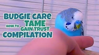 Download Budgie Care | How to Tame, Gain Trust Compilation Video